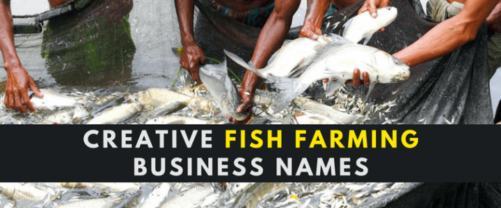 Business archives useful blogging for Creative fish names