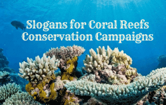 20 Best Slogans for Coral Reefs Conservation Campaigns 2017